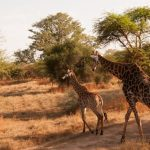 Une expédition en safari lors d'un voyage au Sénégal
