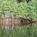 Passer en Guyane