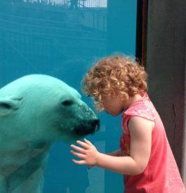 Rejoindre le parc d'animaux sauvage de St Félicien