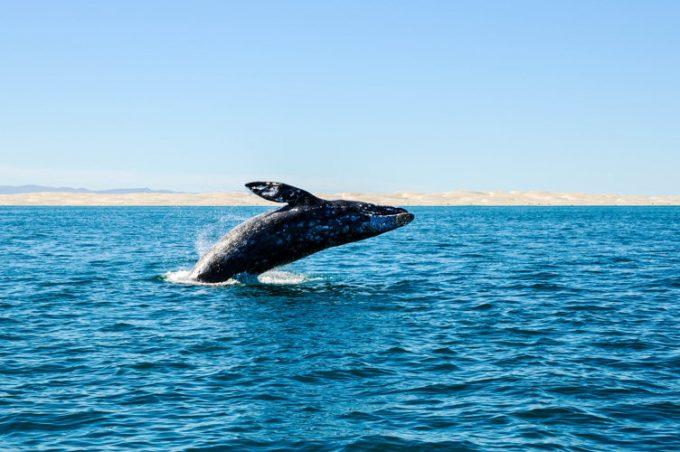 Un voyage d'observation de baleines