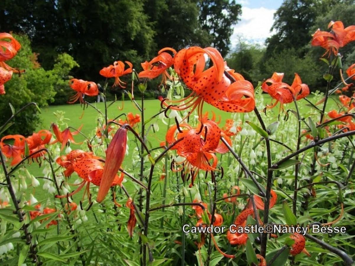Fleurs du Cawdor Castle en Écosse