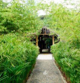 Séjour de rêve au Butterfly House Bahia au Brésil