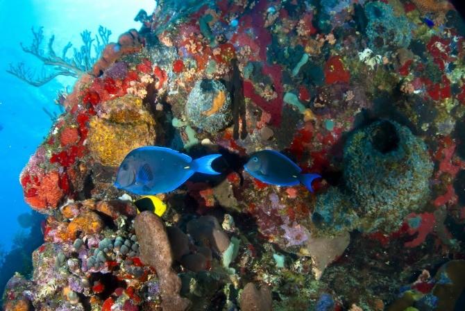 Top 10 des meilleures îles de plongée des Caraïbes