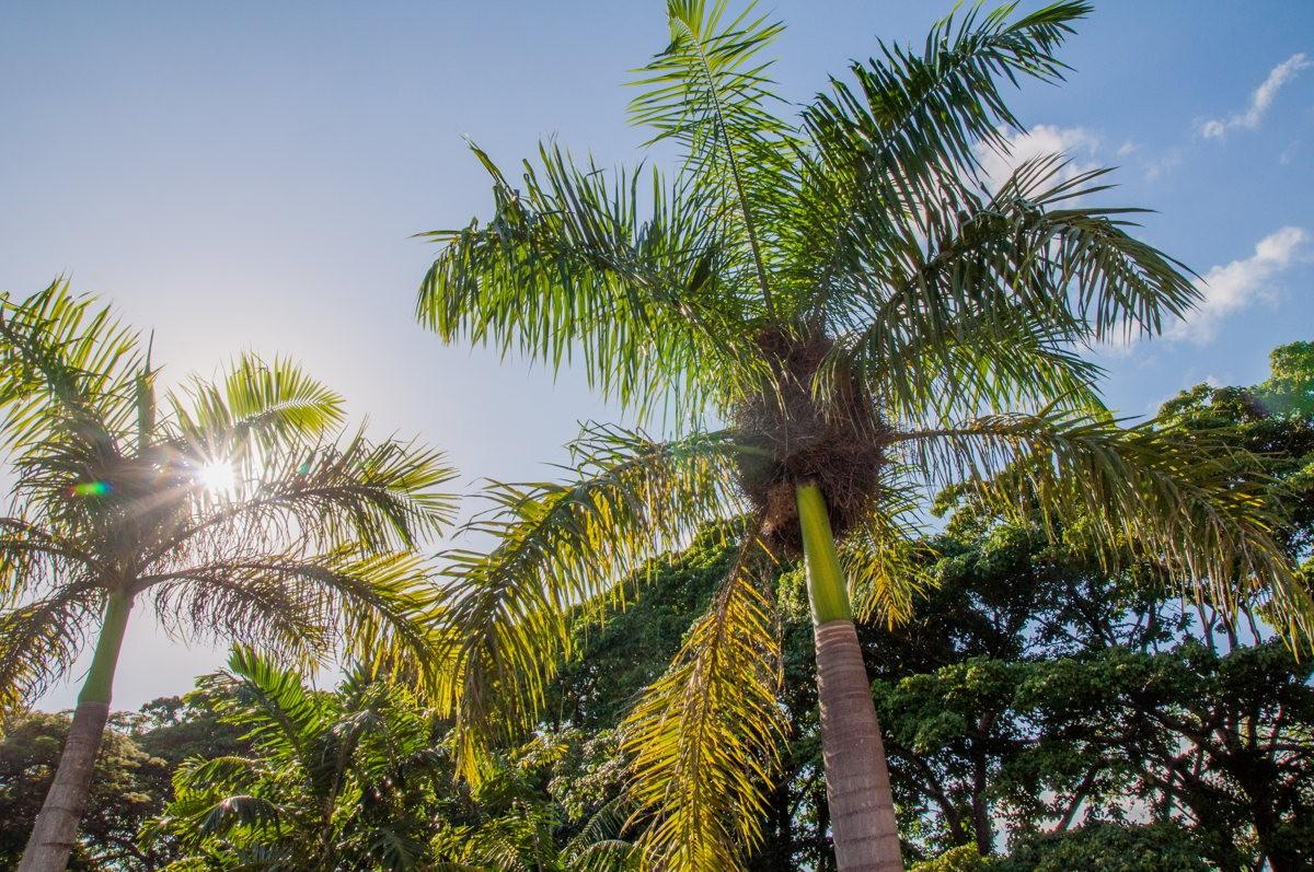 Soleil à l'horizon sous les palmiers à la Romana !