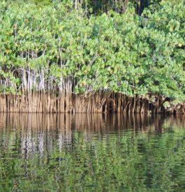 Voyage aventure en Guyane