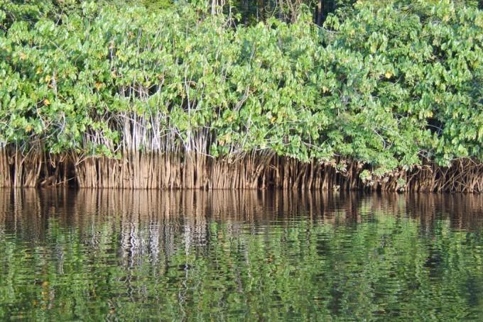 La Guyane - destination sensations