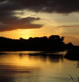 Traverser les marais de Kaw en Guyane