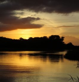 Parcourir les Marais de Kaw en Guyane