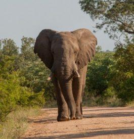 Voyage en Afrique du Sud au Parc Kruger