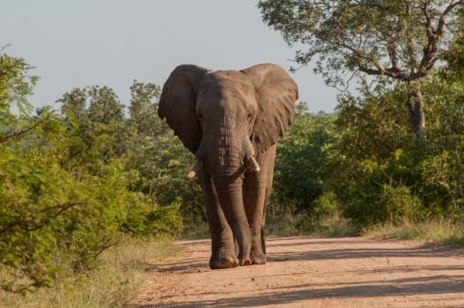 Voyage en Afrique du Sud - Parc Kruger