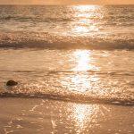 Découvrir nHarbour Island, une île sublime avec son sable rose dans les Bahamas