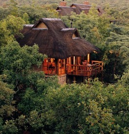 safari Makwati afrique du sud