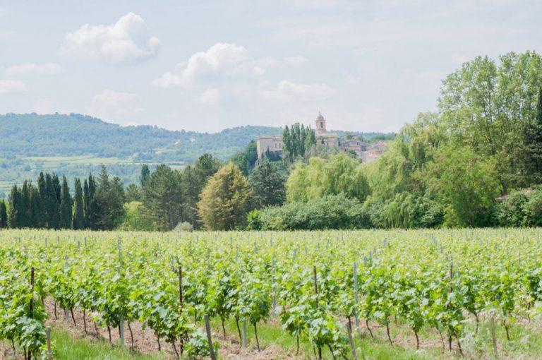 Paysage de vignobles dans le Vaucluse