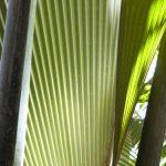 Visiter la Vallée de Mai aux Seychelles
