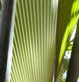 La Vallée de Mai, le jardin d'éden des Seychelles
