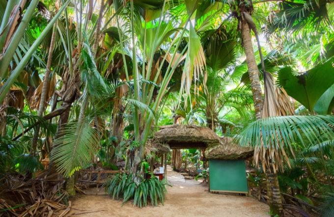 La Vallee De Mai dans la forêt tropicale