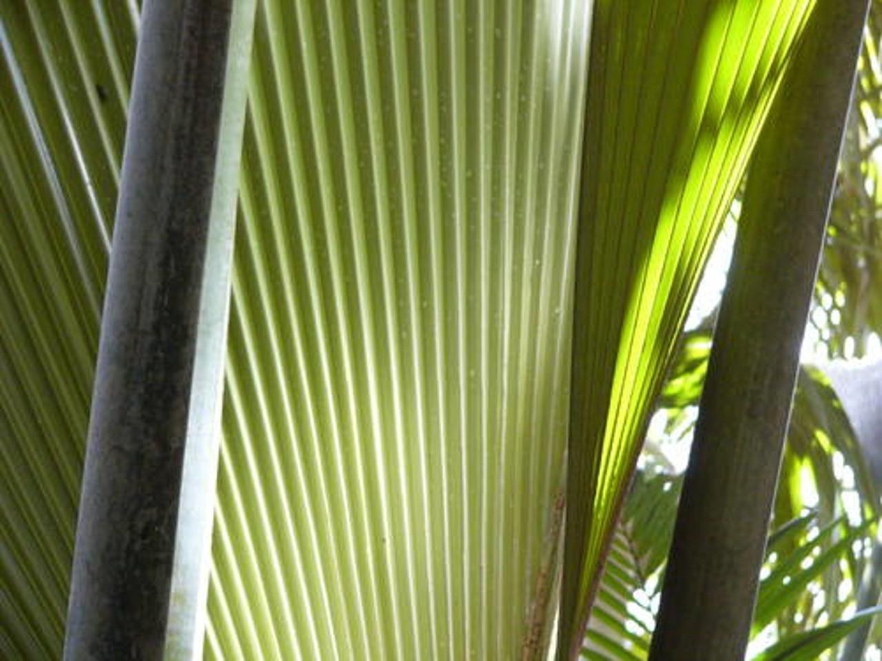 visiter la vallee de mai aux seychelles