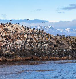 Parenthèse incroyable à Ushuaïa en Argentine