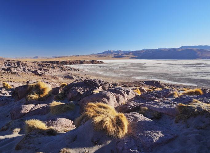 Admirer la lagune blanche en Bolivie