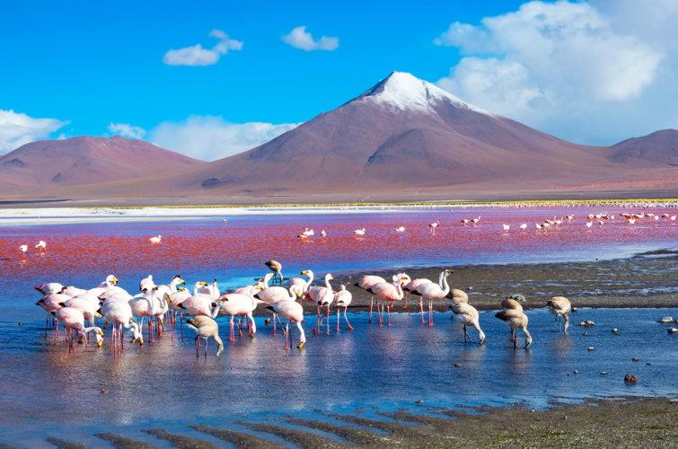 lagune blanche - road-trip en Bolivie