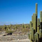Road-trip Argentine : De Salta à La Quebrada de las Conchas