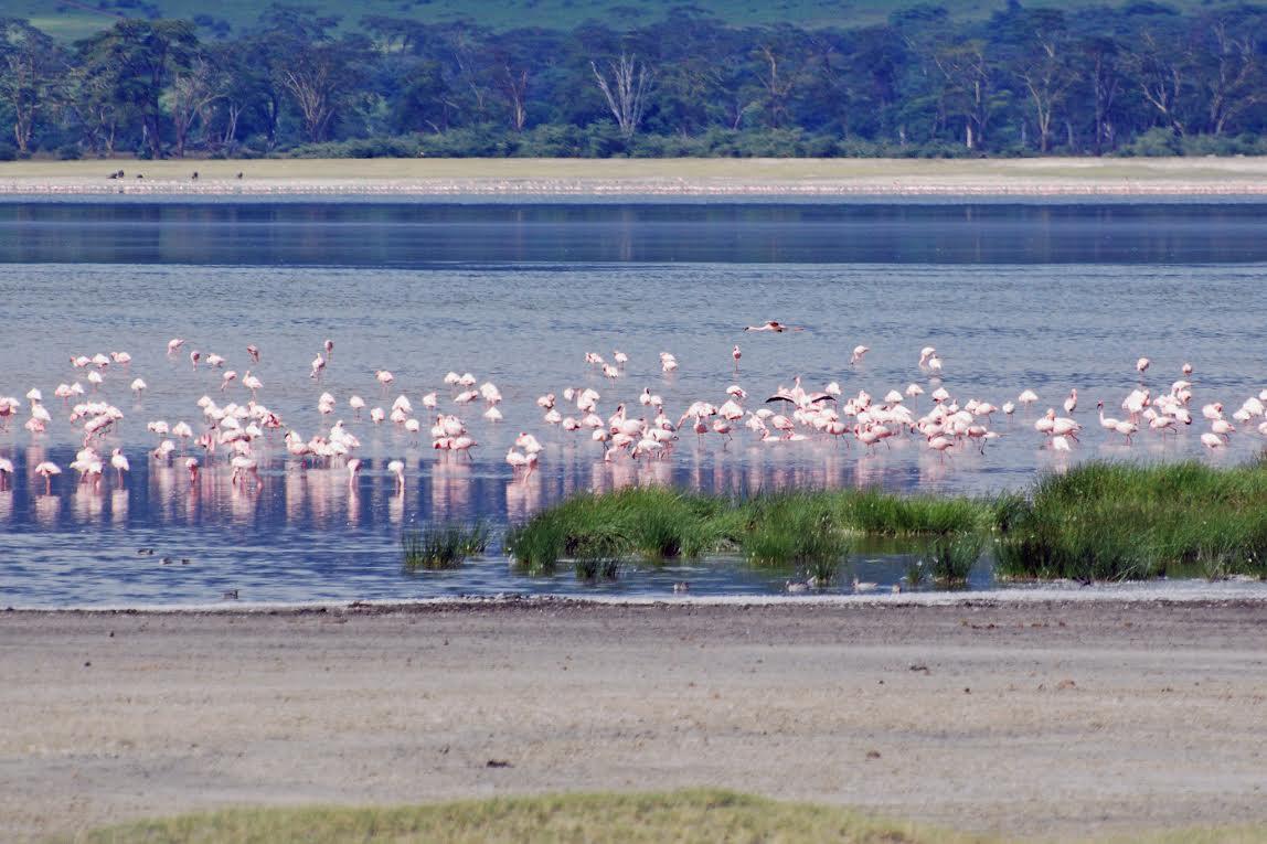 Voyage Tanzanie - cratère du Ngorongoro - Tanzanie
