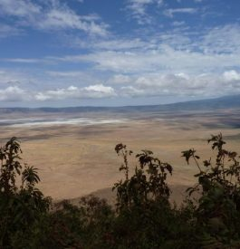 Partir explorer le cratère Ngorongoro, en Tanzanie