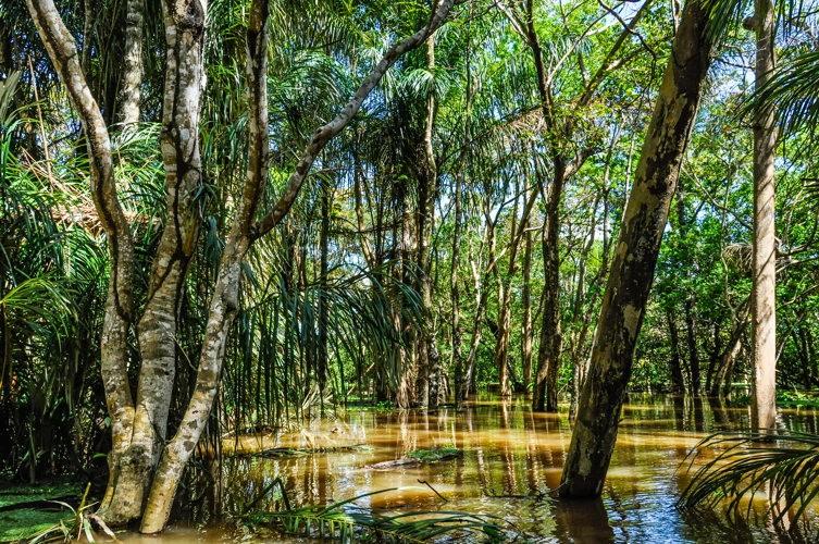 Balade en pirogue dans la forêt amazonienne