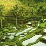 Dépaysement garanti à Ubud