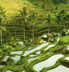 Se changer les idées à Bali lors d'un voyage