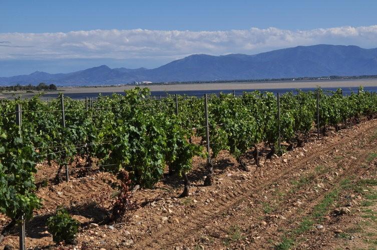 Impossible de ne pas goûter à un côte de Provence !