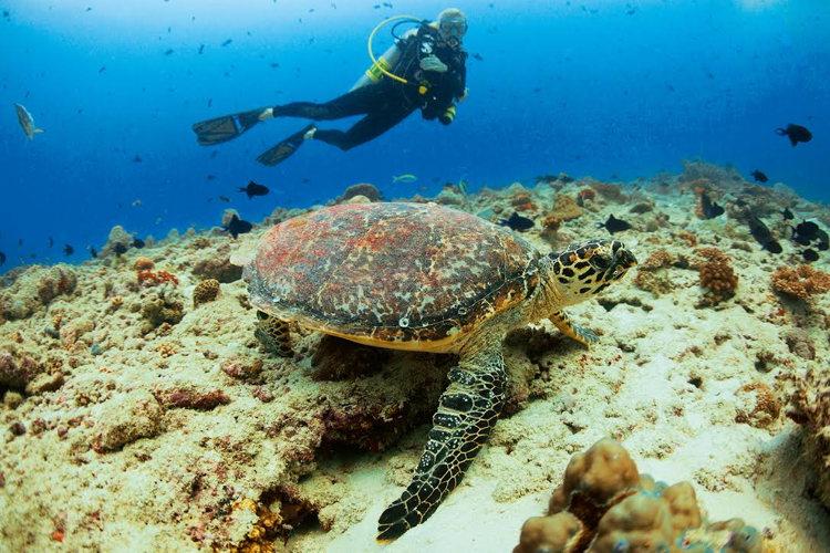 Les eaux riches des Maldives
