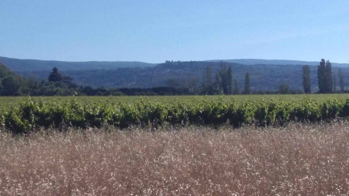 Les vignes du Chateau les Eyteins