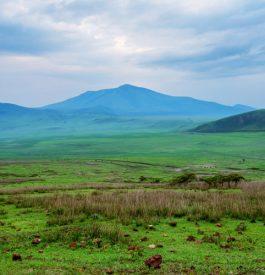 Passer en Tanzanie