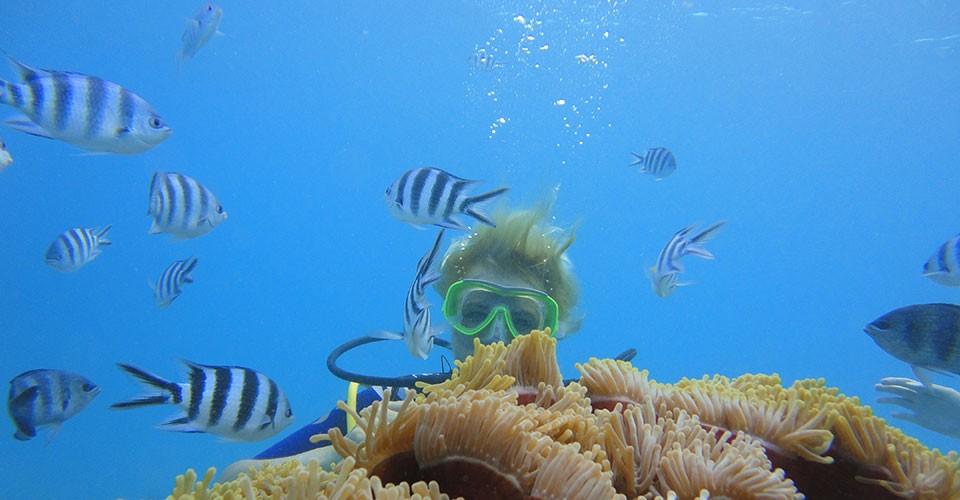 Plongée sous marine à l'île des deux cocos