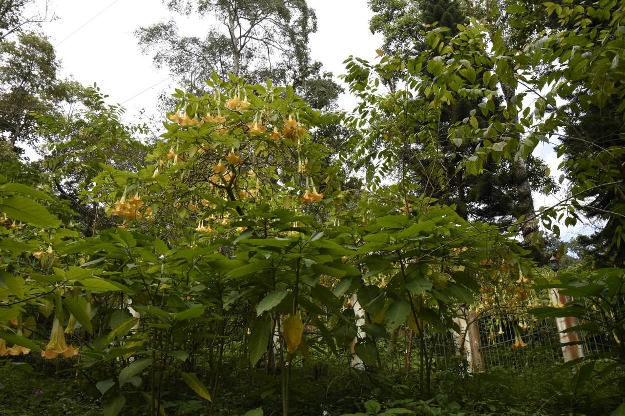 Dans la forêt tropicale près de Chiang Mai