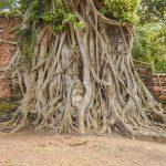 L'un des bouddhas les plus instagrammés de la Thaïlande