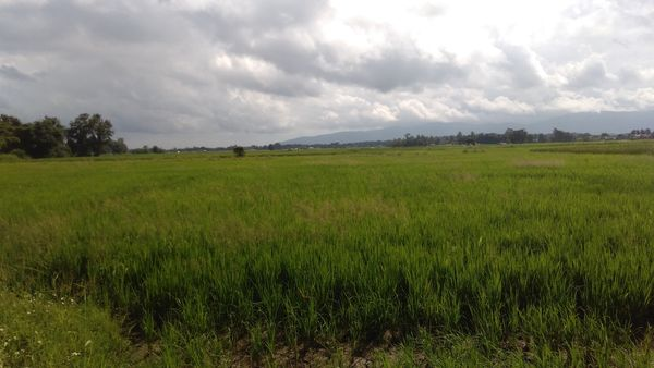 Quelques minutes avant l'accident au milieu des rizières
