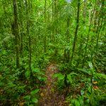 Vivre en Guyane, une expérience de voyage