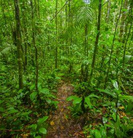 Partir en Guyane, un choix audacieux