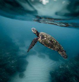 Plongée sous marine au Chili