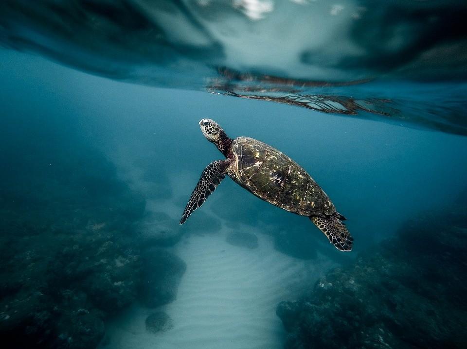 Découvrez la plongée sous-marine au Chili