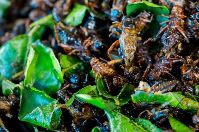 insectes thailande