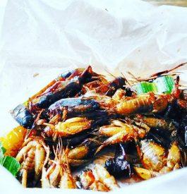 J'ai testé de manger quelques insectes en Thaïlande
