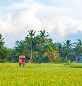 Impossible d'oublier un voyage à Bali