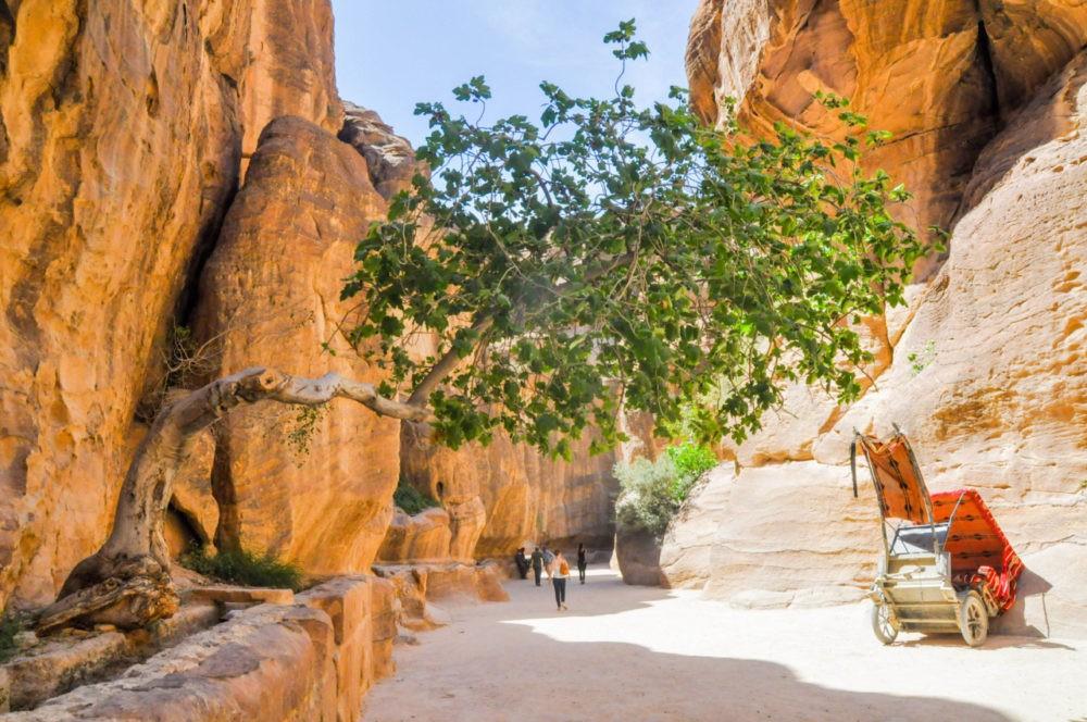 La végétation éparse à Pétra en Jordanie