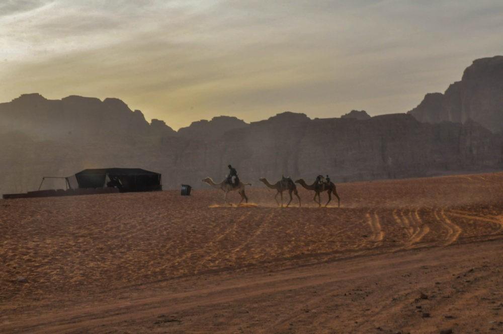 Troupeau bédouin dans le Wadi Run en Jordanie