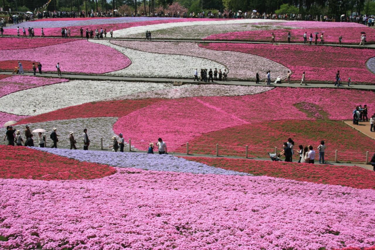 """Résultat de recherche d'images pour """"seibu chichibu hitsujiyama park"""""""