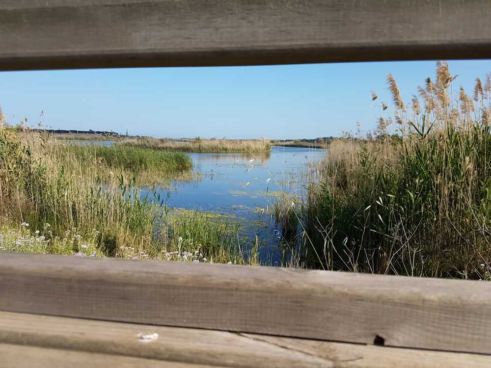 Admirer réserve naturelle delta lobregat Barcelone