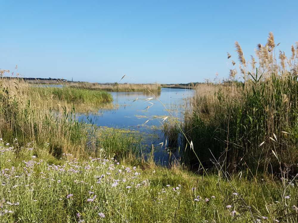 La réserve naturelle du delta de Llobregat, à Barcelone